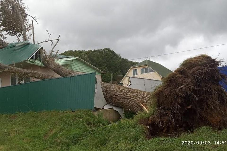 В Приморье «Майсак» оставил после себя сотни поваленных деревьев и обесточил практически одновременно 74 населенных пункта
