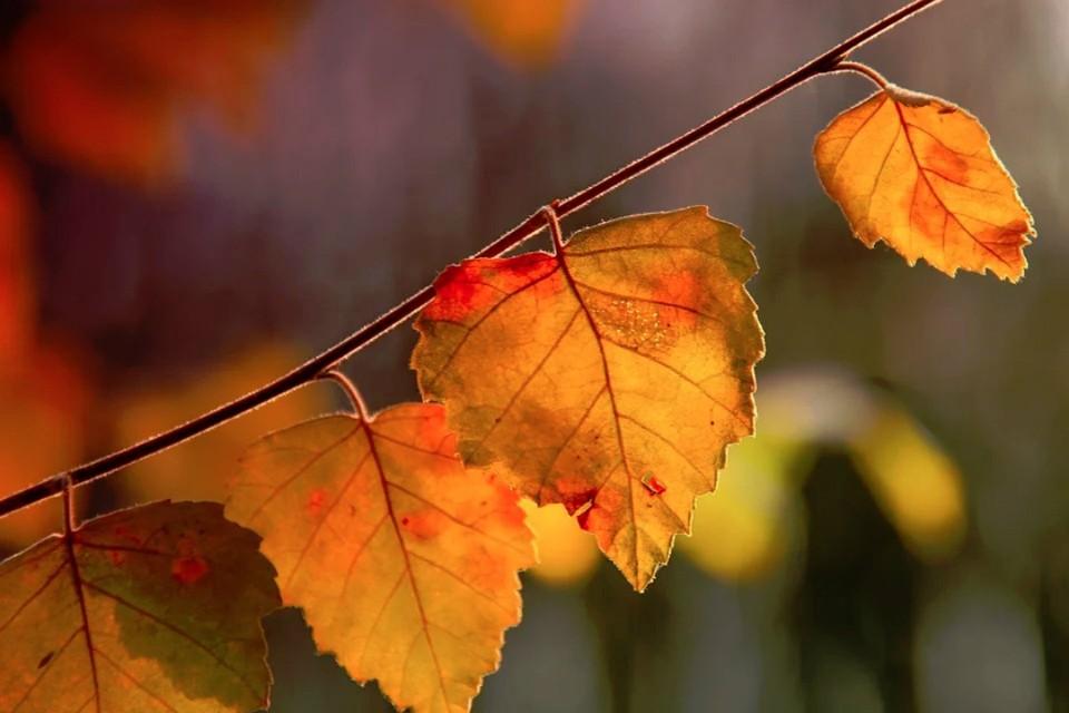 С 23 сентября в регионе ожидается наступление «бабьего» лета. Фото: pixabay.com