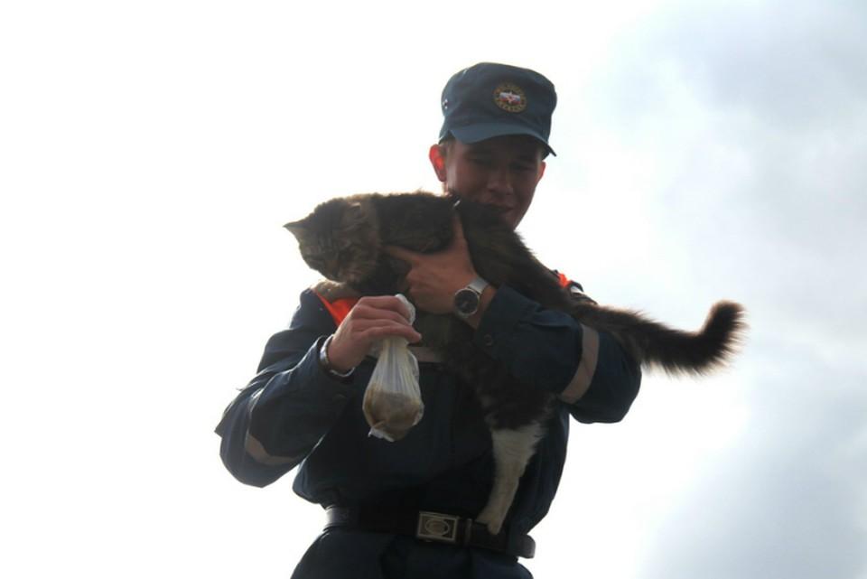 В Хабаровском крае с затопленных территорий спасли животных