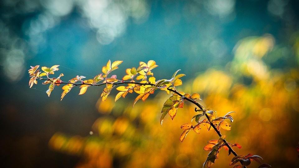 В Приморском крае с каждым днем все яснее и яснее ощущается дыхание осени. фото: pixabay.com
