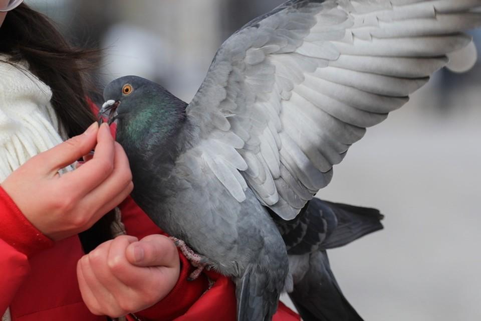 «Может, это птичий коронавирус?»: в одном из городов Башкирии массово начали гибнуть голуби