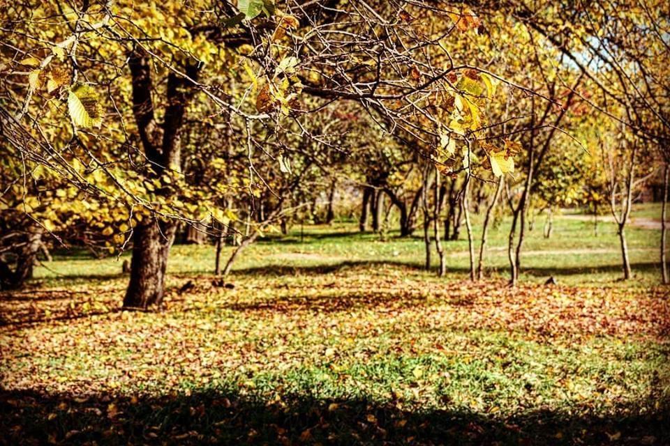 В рамках госпрограммы продолжается возрождение крымских лесов.