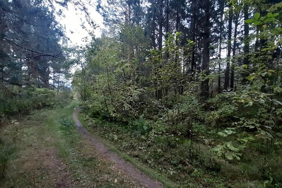 Полицейские обнаружили на топинке в лесу следы детской обуви.