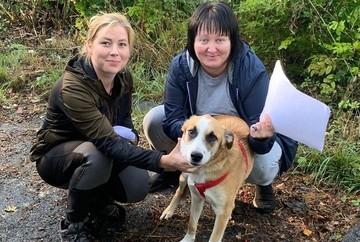 «Десант добрался до Швеции»: волгоградским собакам в коронавирус открыты все границы