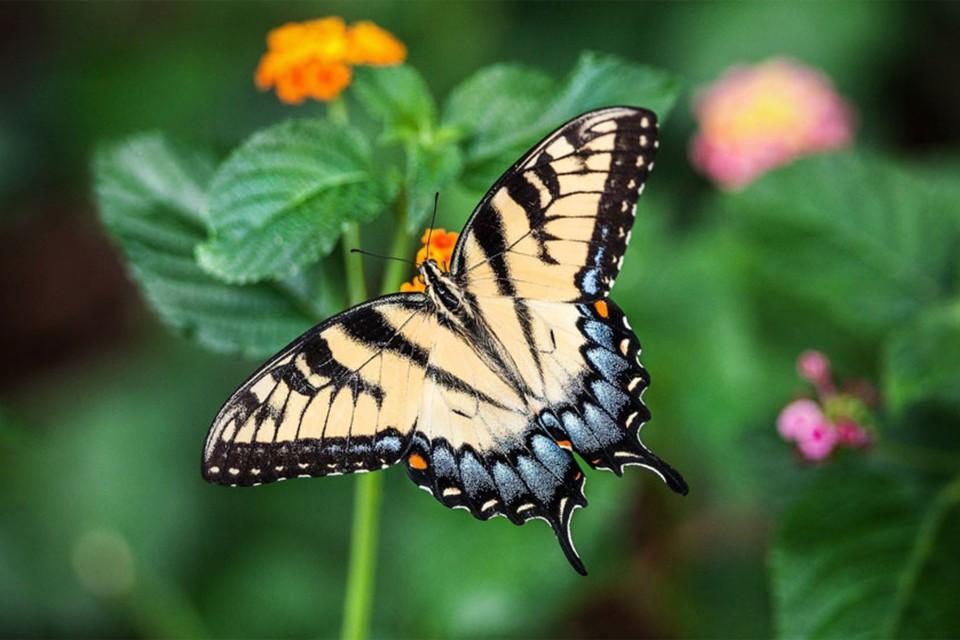 К чему снятся бабочки