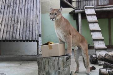 Питомцы пензенского зоопарка получают подарки