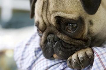 Рвота у собак: что дать для лечения, почему происходит, как вызвать при необходимости