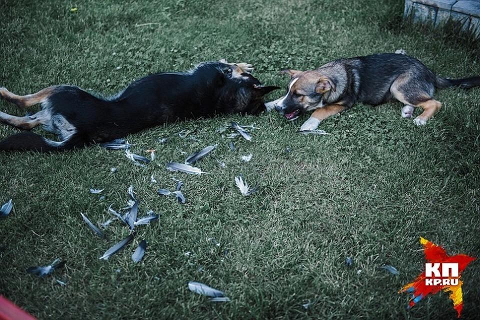 Домашняя собака пала от бешенства