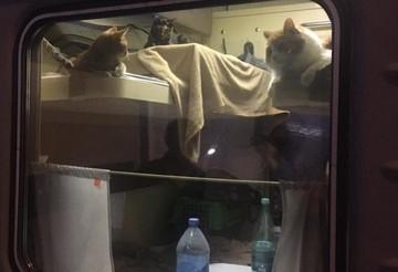 Пассажир поезда «Москва - Анапа» выкупил всё купе для себя и кошек. Но таковы правила перевозчика