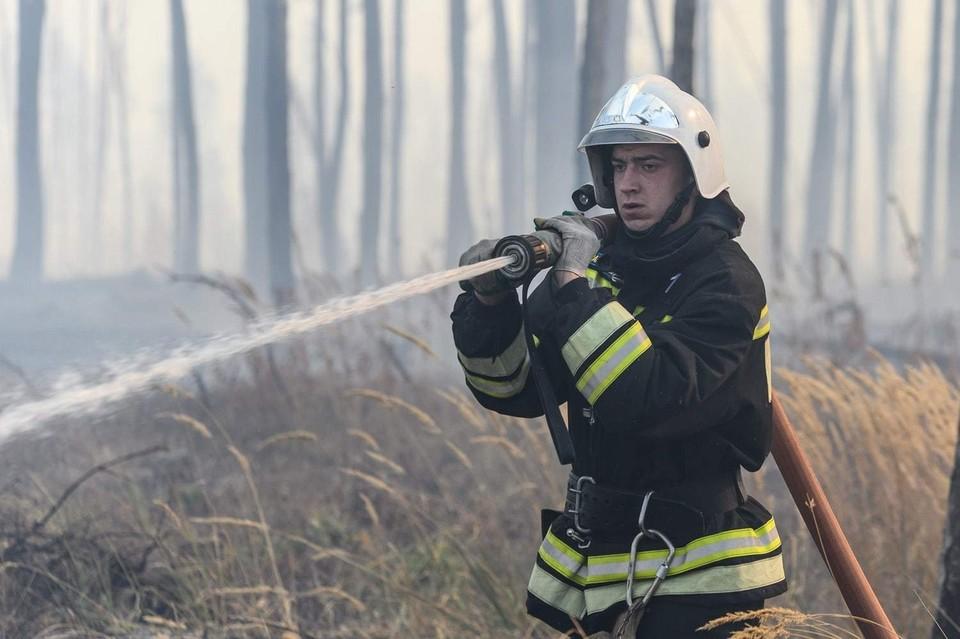 Расследование причин пожара в Северном лесу взято на особый контроль