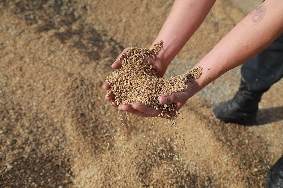 За девять месяцев 2020 года экспорт аграрной продукции из России вырос почти на 14%.