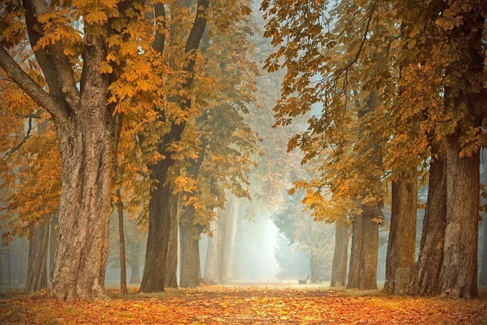 Похолодание ожидаются в Казахстане 22-24 октября.
