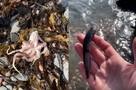 СКР назвал основную версию отравления воды на Камчатке