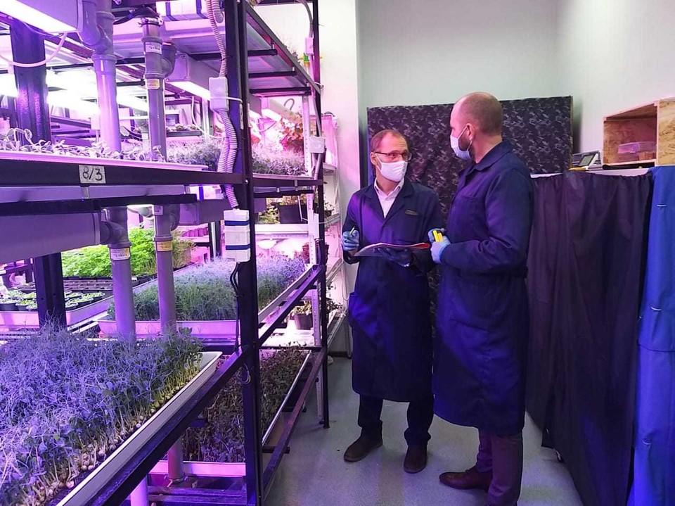 Сейчас выращивается более 20 видов микрозелени