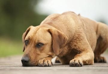 Отравление у собаки: симптомы, лечение, профилактика