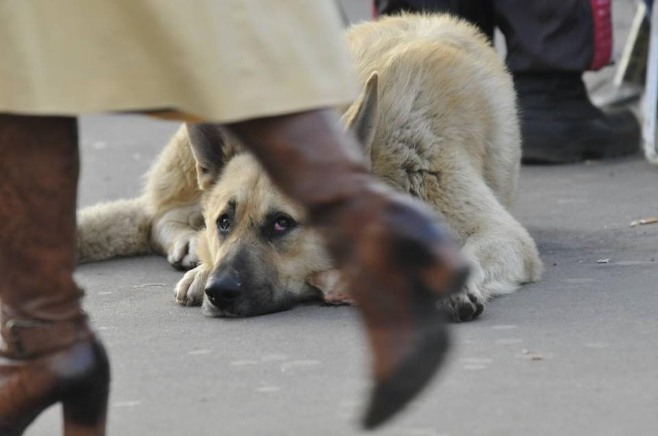 Теперь владельцам собак нужно следить за своими питомцами и не выгуливать их без поводков и намордников.