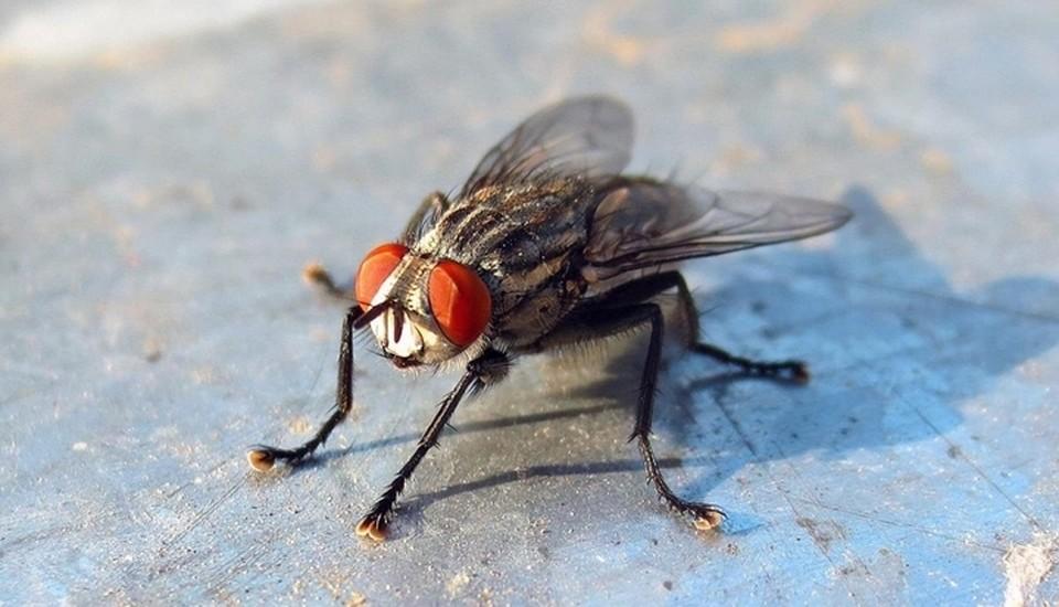 """За насекомое он хочет 300 рублей. Фото: сайт """"Авито"""""""