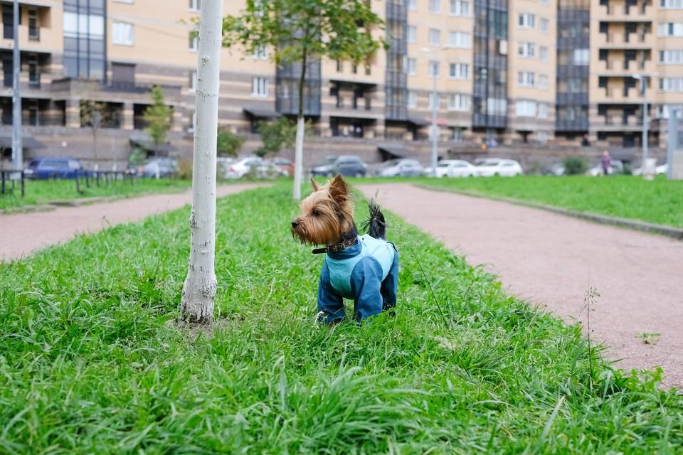 Маленькая собачка стала причиной межнационального конфликта в Петербурге.