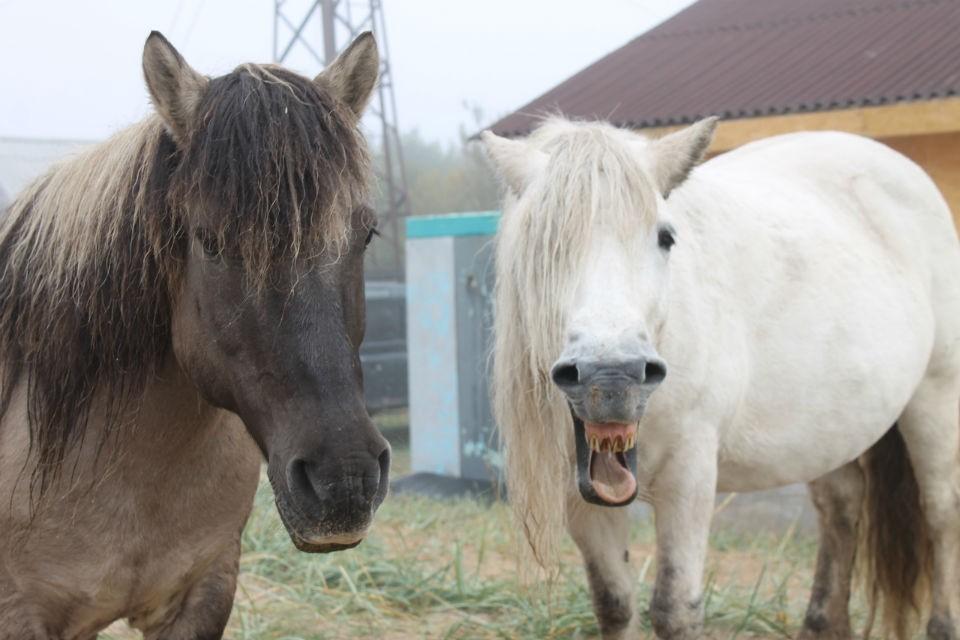 Для диких лошадей из Кузомени собрали еду. Фото: vk.com/mustangipomory