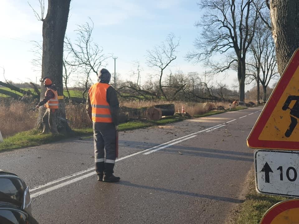 Очевидцы сообщают об уже не менее чем десятке поваленных деревьев.