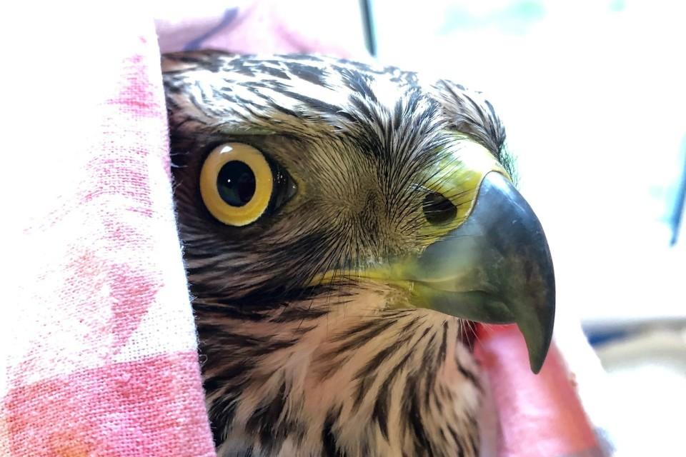 Птице нужна помощь добрых людей. Фото: Наталья Раевская
