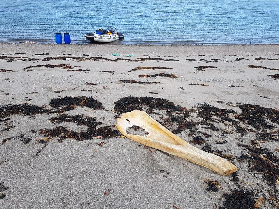 Как мурманчанин рассказал «КП», кость лежала на литорали, но уже через несколько дней ее не было. Фото: Антон Чайко.