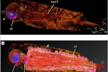 Утыканная булавками мумия египетской девочки озадачила исследователей