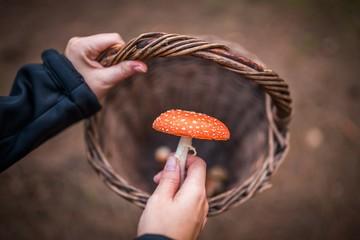 Съедобное - несъедобное: В Молдове из-за отравления грибами скончались четыре человека