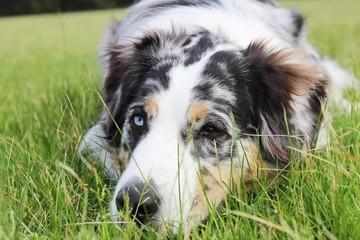 Глисты у собак: как защитить питомца