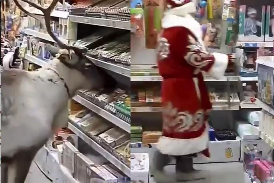 В Сургуте любопытный олень Валерчик зашел в магазин за подарками вместе с Дедом Морозом. Фото: скриншот с видео