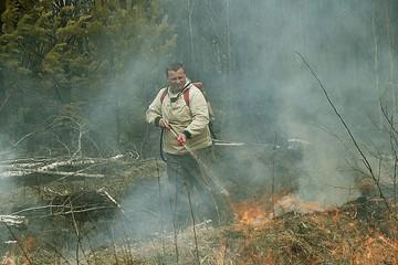 Виновников лесных пожаров призывают активнее привлекать к ответственности