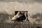 Скулящую от боли собаку вытащили из плена спасатели в Еврейской автономии