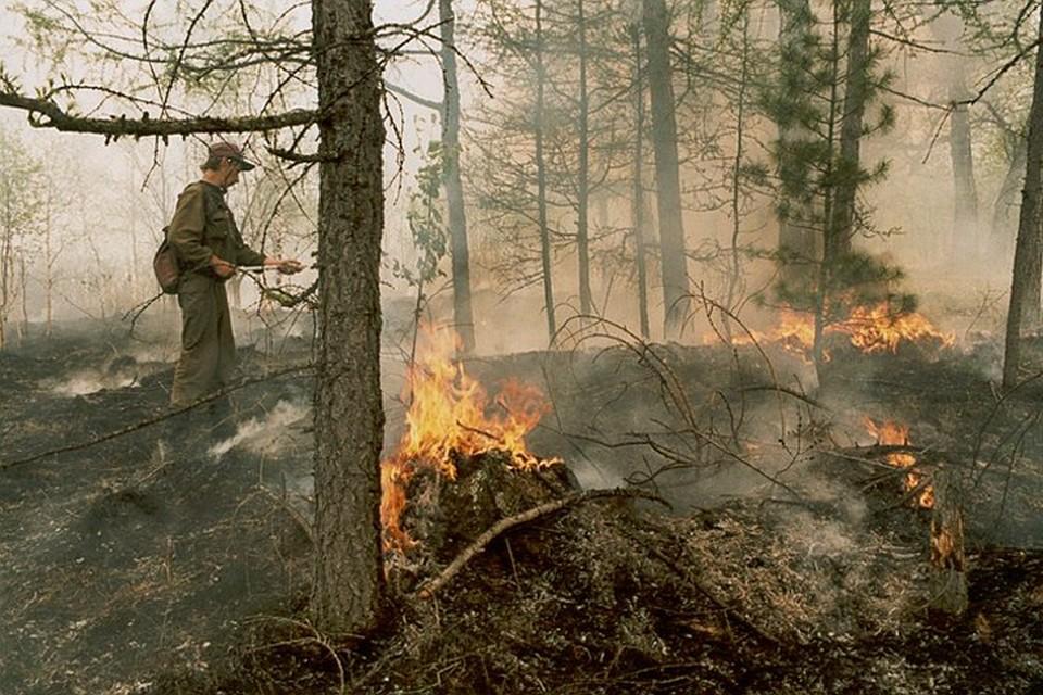 Государство должно максимально эффективно использовать готовность жителей страны участвовать в сохранении лесов.
