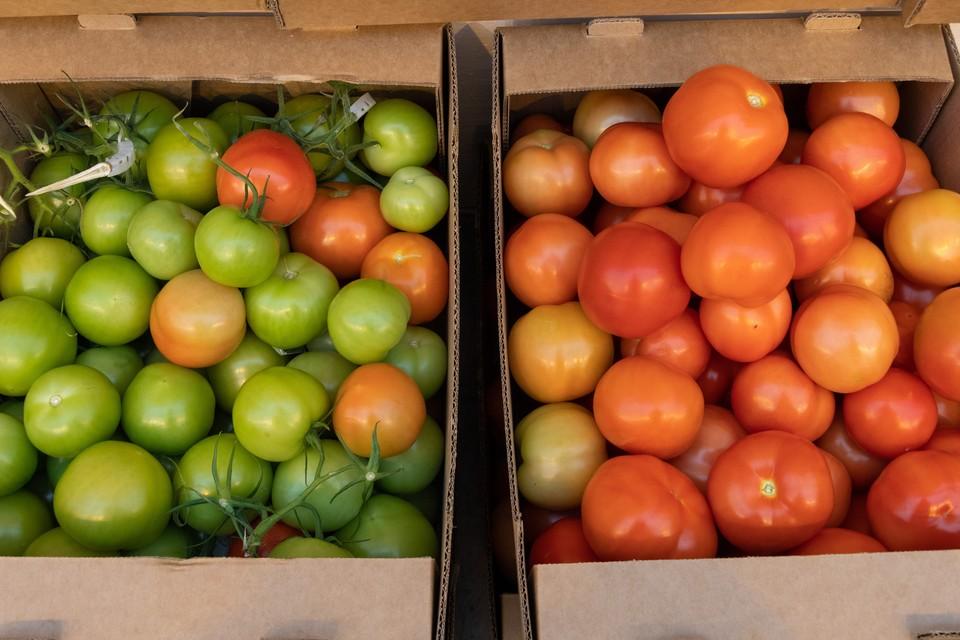 Россельхознадзор запретил импорт томатов и перца из Узбекистана