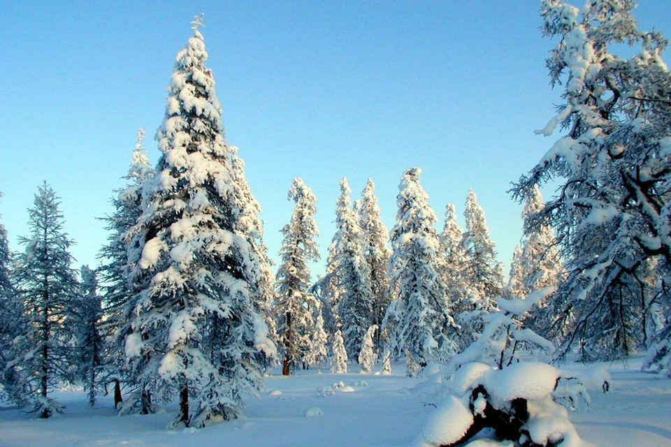 На всей территории Российской Федерации завершился первый цикл государственной инвентаризации лесов.