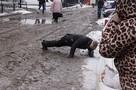 «Он полз по скользкой дороге, пока все равнодушно обруливали». Безразличие жителей Владивостока удивило очевидца