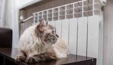 Лучшие радиаторы отопления для квартиры: разбираем особенности каждого