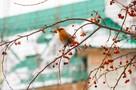В Новосибирск прилетели редкие красивые птицы: рассказываем, кого вы видите на деревьях
