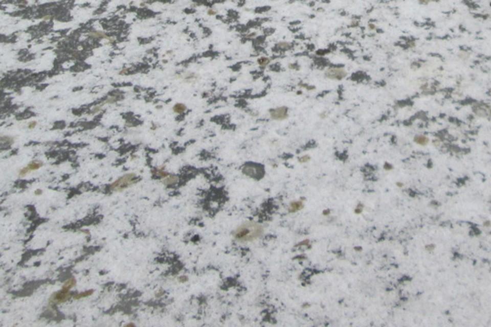 Во второй день 2021 года в Беларуси будет мокрый снег.