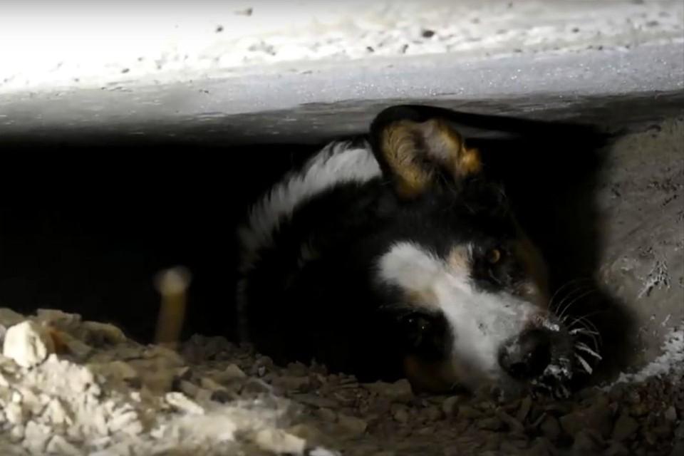 Новосибирец Евгений Кочкин спас собаку, застрявшую под бетонной плитой. Фото: Кадр из видео