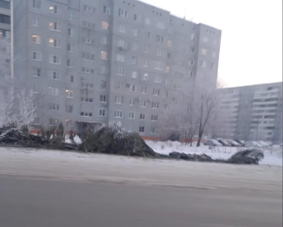Сейчас все брошенные деревья уже убрали.