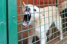 Домашняя собака загрызла годовалую девочку в Кузбассе