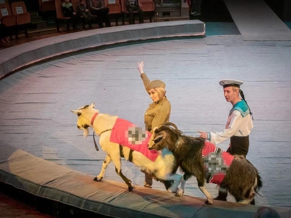 Архиерейская елка в цирке Ижевска закончилась скандалом. Фото: /vk.com/udmcircus