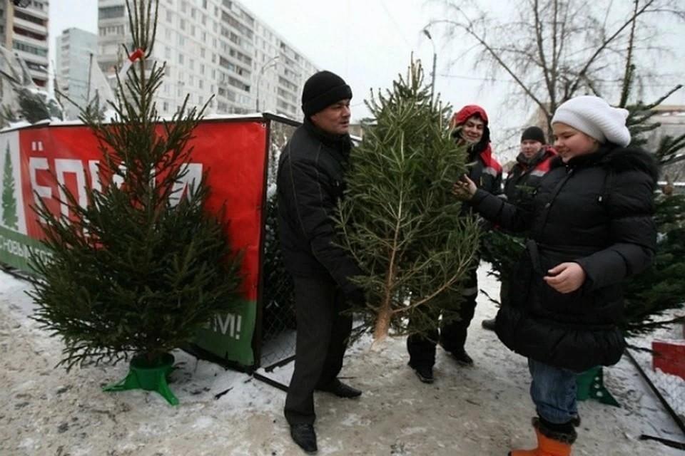 Ненужные деревья создают большую нагрузку на коммунальные службы.