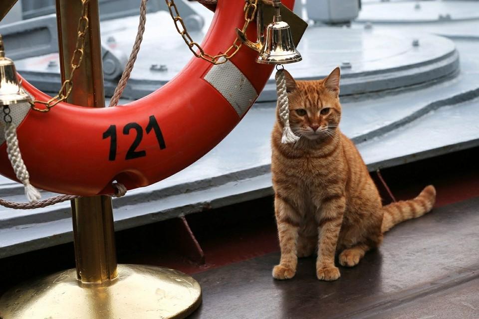 Кошке удалось выжить на судне, следовавшем на протяжении трех недель из Одессы в Израиль