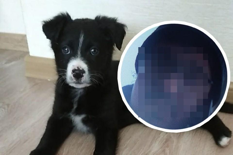 «Они его будто почувствовали и выкопали из сугроба!»: собаки спасли щенка, которого зоозащитники случайно отдали живодеру