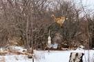 Под Симферополем дикая лиса залезла на дерево ради куска сала