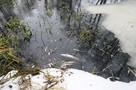 Воронежцы больше не смогут купаться в Усманке