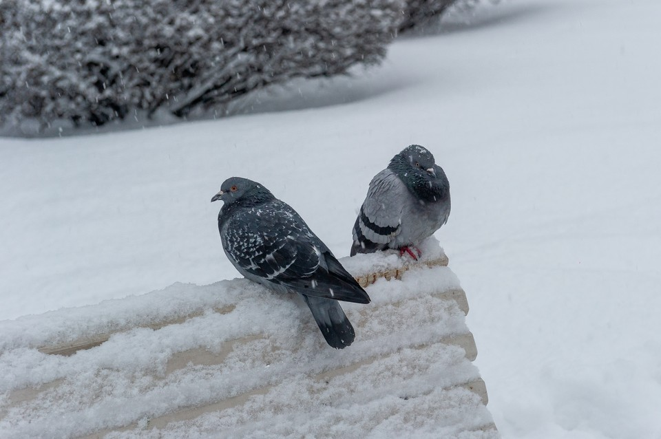 Морозы ждут петербуржцев всю неделю.