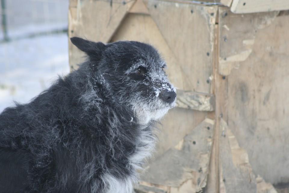 Прогноз погоды на середину февраля в Алтайском крае